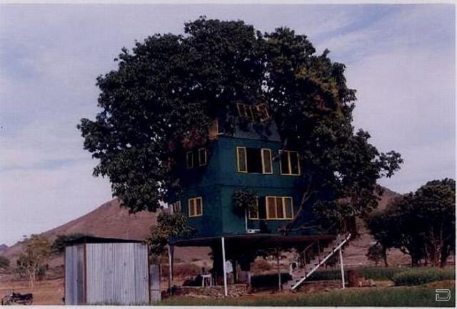 Дом на дереве манго (11 фото)