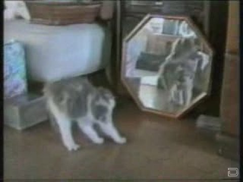 видео приколы с котами воителями