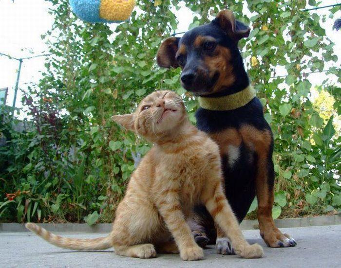 Прикольные картинки котов или собак