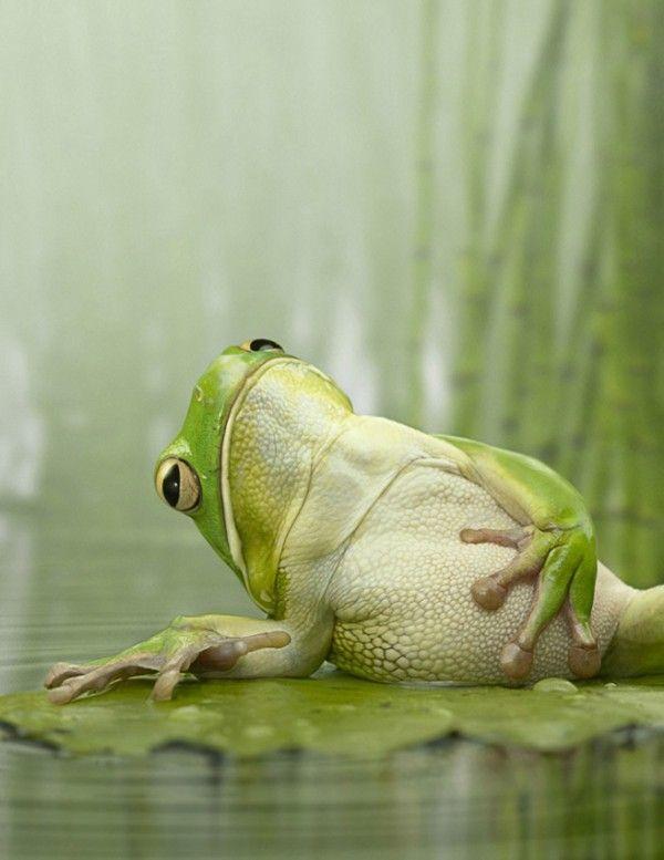 Смешное фото спящей жабы спорт-залы