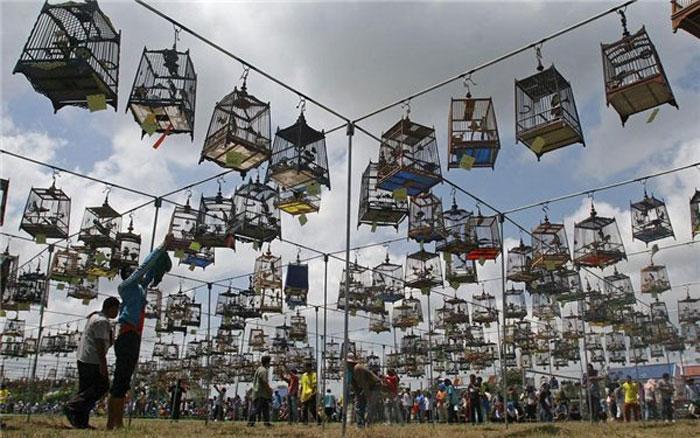 Ежегодный конкурс пения птиц в Таиланде