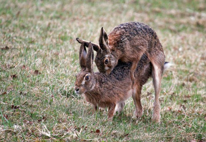 Смешные фото с зайцами, открытки день рождения