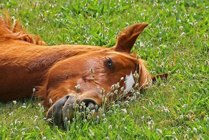 Днем, приколы картинки на траве