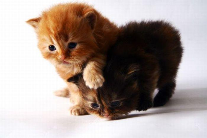 Открытки поздравление, смотреть картинки смешные с надписями котята