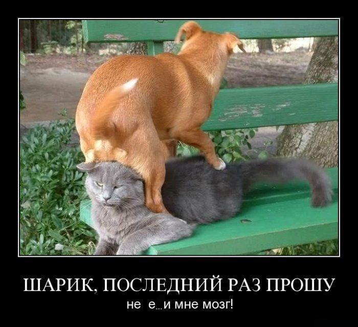 Смешные картинки - Страница 2 1271397182_doseng.org_001
