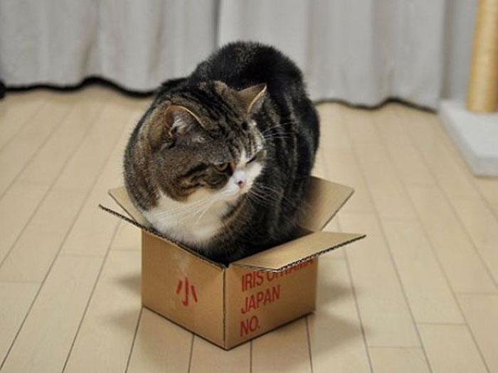 Поделка из коробки №4. Домик для кота