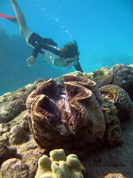 Самый большой моллюск в мире фото