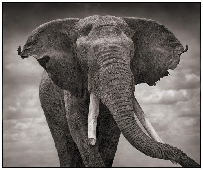 Подборка черно-белых фотографий Африки (25 фото)