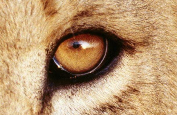 Самые удивительные глаза животных