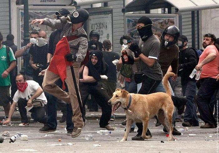 Бездомный пёс по имени Сосиска участвует во всех акциях протеста