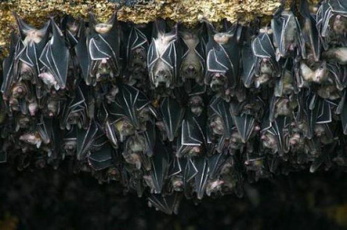 Пещера летучих мышей в Сомалии (12 фото)