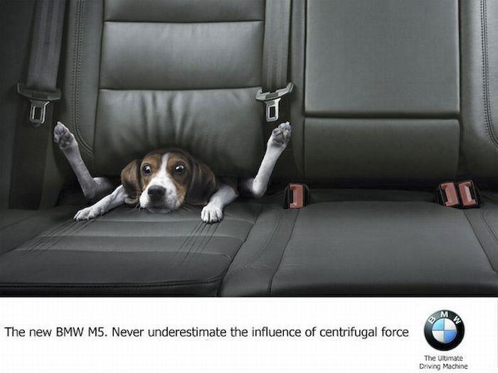 Подборка лучших рекламных принтов с собаками (33 фото)