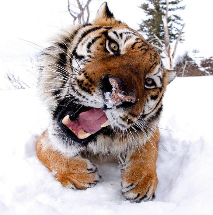 Съемка в нескольких сантиметров от диких зверей (15 фото)