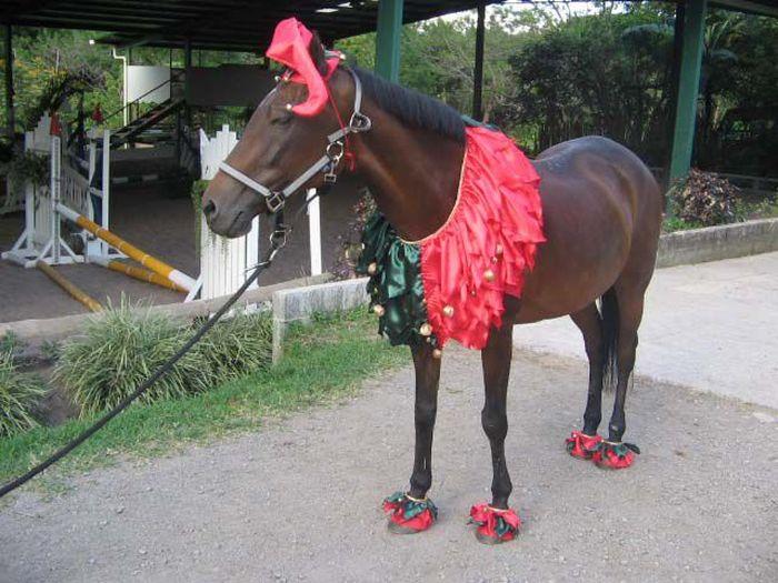 букет наряды для лошадей в картинках клоун