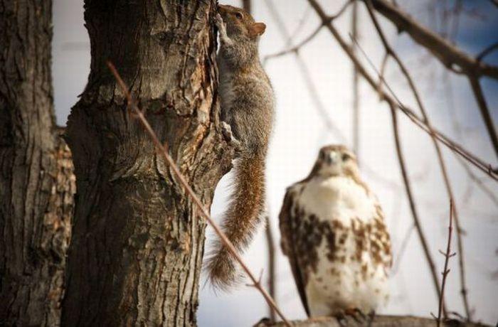 совместное фото совы и белки этот момент