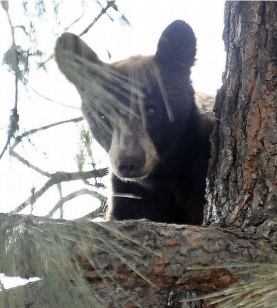 Спасение медвежонка (12 фото)