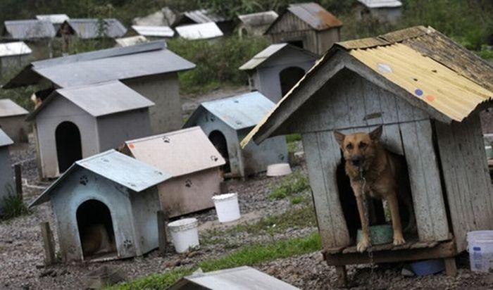 Приют для бездомных собак в Бразилии (7 фото)