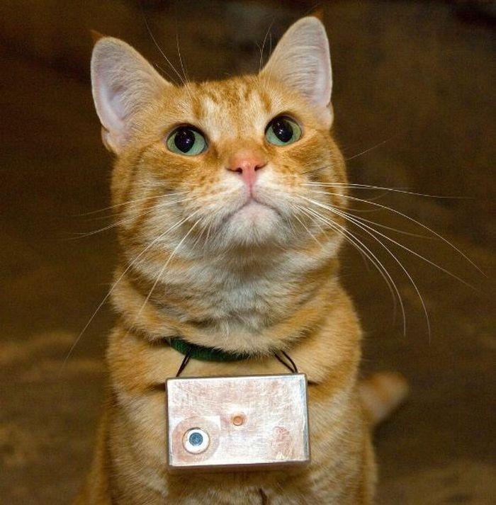 Жизнь глазами кота Купера (45 фото)