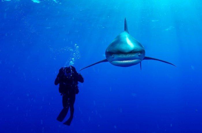 Снимки легендарного подводника (19 фото)