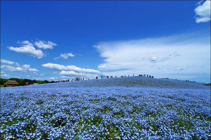 Национальный парк Хитачи в Японии (13 фото)