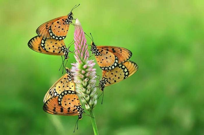 Прикольные фотографии насекомых (20 фото)