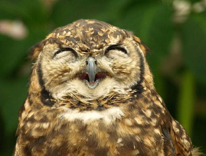 Улыбчивые совы (21 фото)