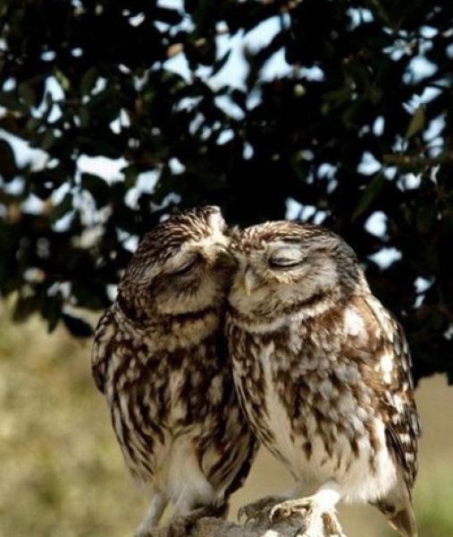 Улыбчивые совы 21 фото