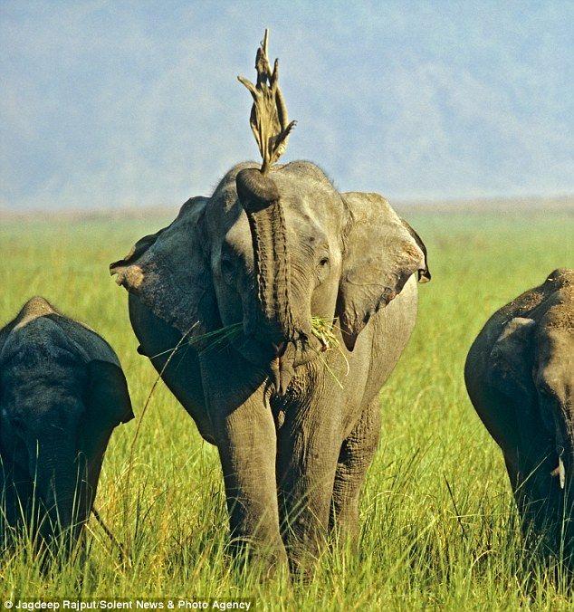 Про дружбу слонихи и ящерицы (3 фото)