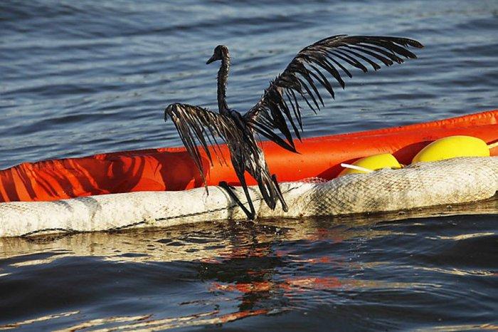 Нефтяная катастрофа в Мексиканском заливе (21 фото)