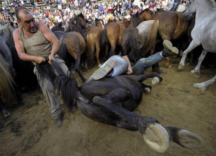 Cтрижка диких лошадей (9 фото)