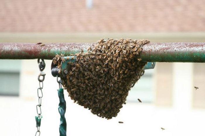Как избавились от осиного гнезда (16 фото)