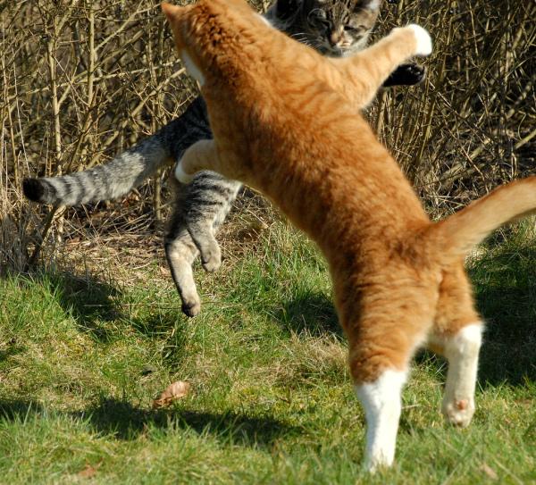 Смешные картинки коты дерутся, открытки