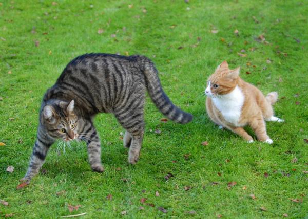 Коты драки играть