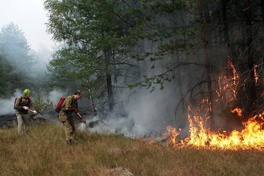 скумпия тушение лесного пожара картинки свадебной флористике этот