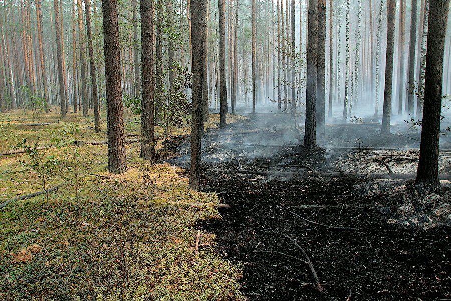 лес после низового пожара фото яйца белки желтки