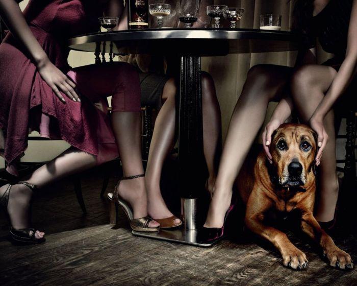 Женские ножки под столом фото 44499 фотография
