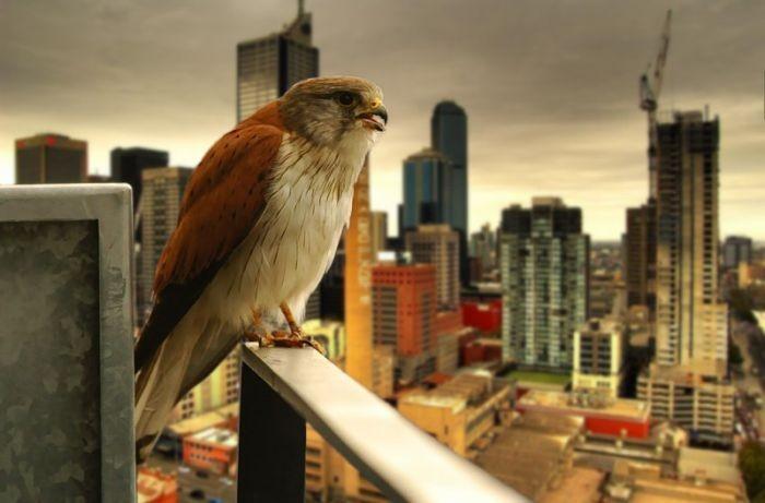 Фотографии птиц (41 фото)