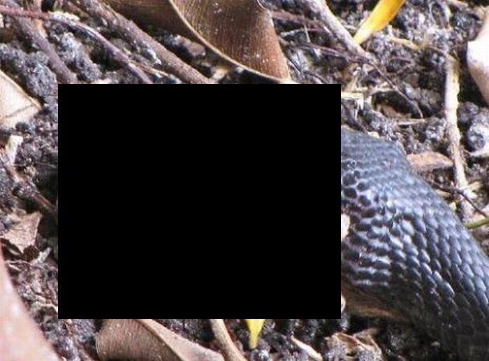 Поединок жабы и змеи