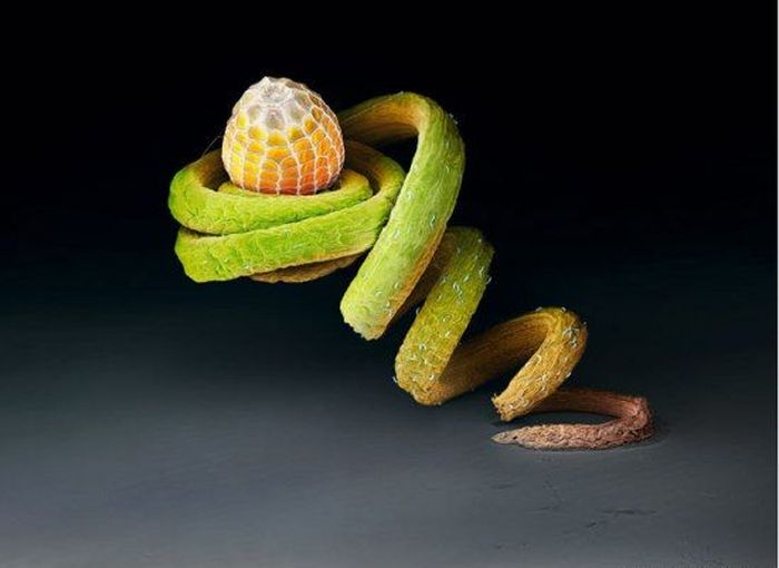Яйца бабочки в макросъемке (9 фото)