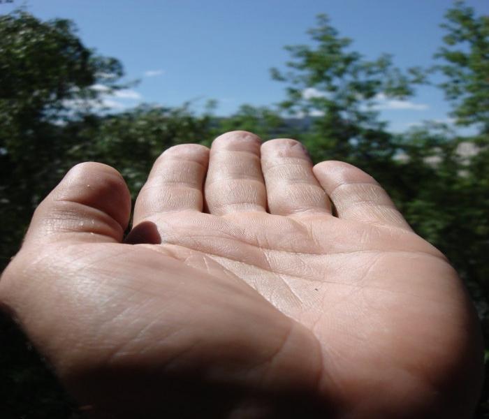 Почему у нас по пять пальцев?