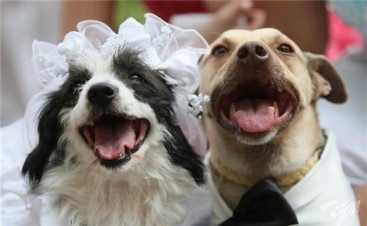 Двух бездомных дворняжек Хатико и Лели на Украине поженили