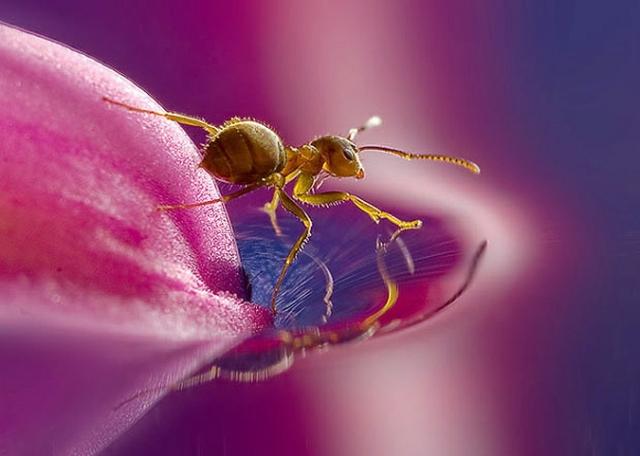 Макросъемка насекомых от Леона Бааса (Leon Baas)