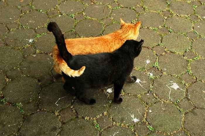 Картинки с кошками смешные и прикольные с надписями про любовь, объемных новогодних открыток