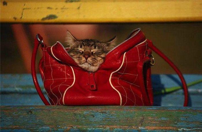 Прикольные картинки с сумками