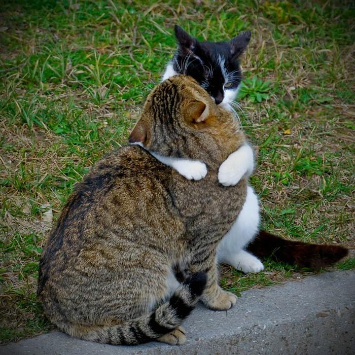 Смешные фото котов секс 28 фотография
