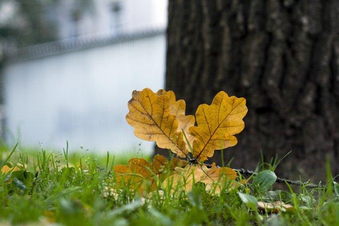 Осень (16 фото)