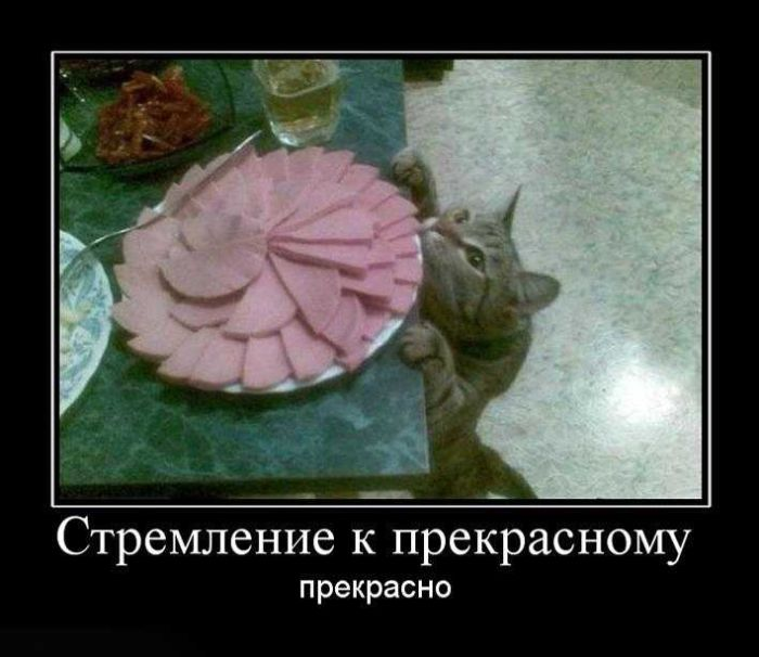 http://doseng.org/uploads/posts/2010-10/1285904112_doseng.org_demotivatory_17.jpg