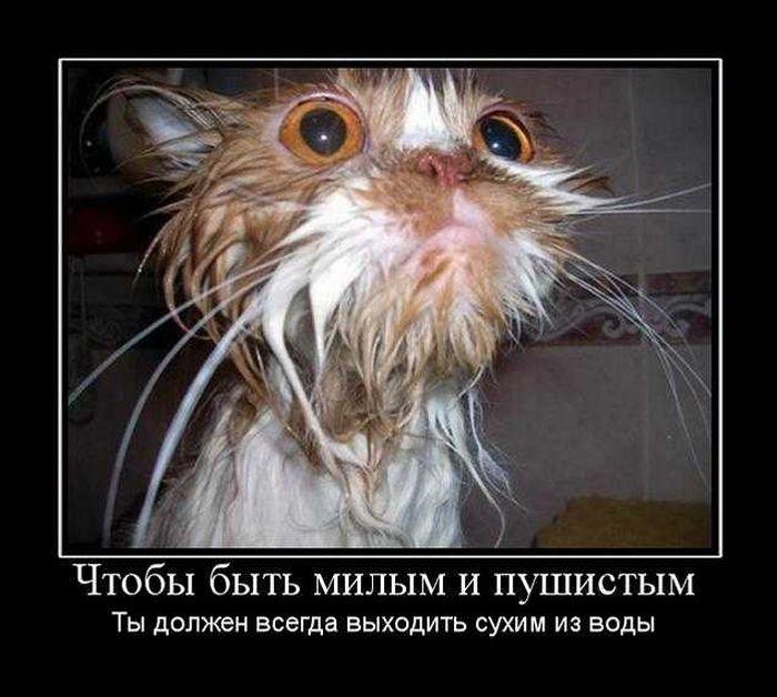 http://doseng.org/uploads/posts/2010-10/1285904169_doseng.org_demotivatory_44.jpg
