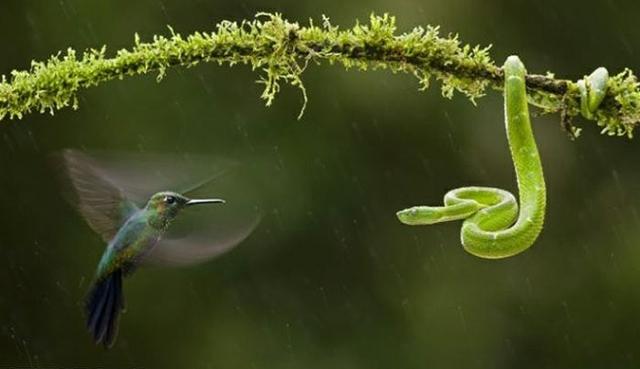 Номинация живая природа