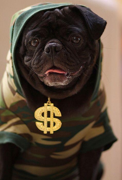 Собаки-гангстеры (22 фото)